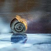 """Картины и панно ручной работы. Ярмарка Мастеров - ручная работа Фотокартина в рамке, картина для интерьера """"Отражение"""". Handmade."""