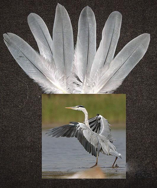 Покровные перья с крыльев