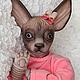 Куклы-младенцы и reborn ручной работы. Заказать Барселона (кошка сфинкс). Наталия Сомова (mireku). Ярмарка Мастеров. Кукла реборн