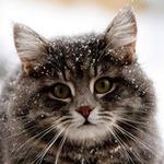 Fluffy-cat - Ярмарка Мастеров - ручная работа, handmade