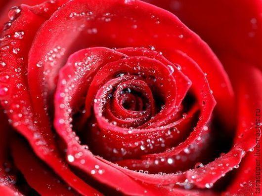 Материалы для косметики ручной работы. Ярмарка Мастеров - ручная работа. Купить Гидролат розы. Handmade. Гидролат розы, роза, гидролат