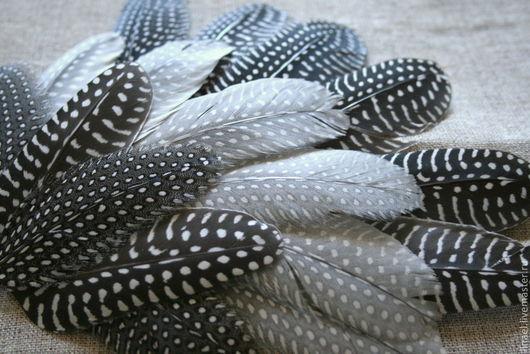 Другие виды рукоделия ручной работы. Ярмарка Мастеров - ручная работа. Купить Перья цесарки. Handmade. Серый, красивые перья