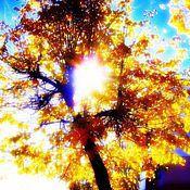 """Картины и панно ручной работы. Ярмарка Мастеров - ручная работа Фотокартина """" Осеннее солнцестояние."""" желтый,ярко- желтый,оранжевый,. Handmade."""