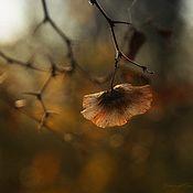 Картины и панно ручной работы. Ярмарка Мастеров - ручная работа Осеннее ...( авторская фотокартина для интерьера). Handmade.