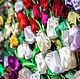 """Картины цветов ручной работы. Картина из атласных лент """"Тюльпаны"""". Мария Людвиг(Гильдебрант). Ярмарка Мастеров. Яркие цвета, вдохновение"""
