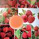 Lip balm'Ripe raspberry', Lip Balm, Solovki,  Фото №1
