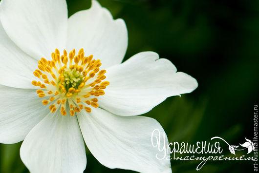 """Фотокартины ручной работы. Ярмарка Мастеров - ручная работа. Купить Фотокартина """"В тени лесов"""". Handmade. Белый зеленый, цветок"""