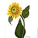 Картина акварелью Подсолнушек  желтый зеленый