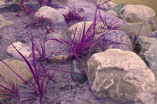 """Фотокартины ручной работы. Ярмарка Мастеров - ручная работа. Купить Фотокартина """"Лиловые берега"""". Handmade. Сиреневый, фиолетовый, трава, камни"""