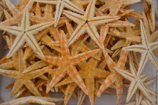 Морские звезды 5-8 см  Цена 1 шт.- 12 руб.