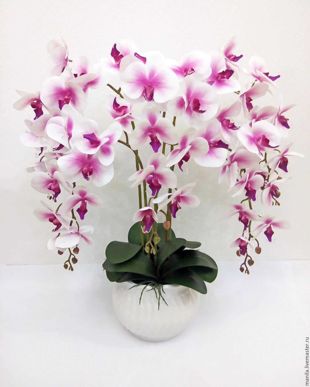 всего орхидея в горшке картинки хорошего качества варианта