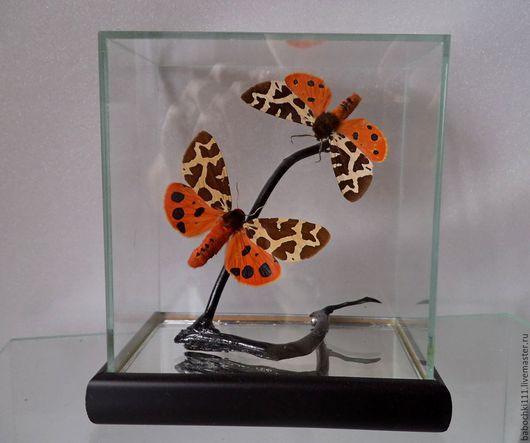 Натюрморт ручной работы. Ярмарка Мастеров - ручная работа. Купить Бабочки Медведицы Кайя. Handmade. Бабочки, бабочки в рамках, сувенир
