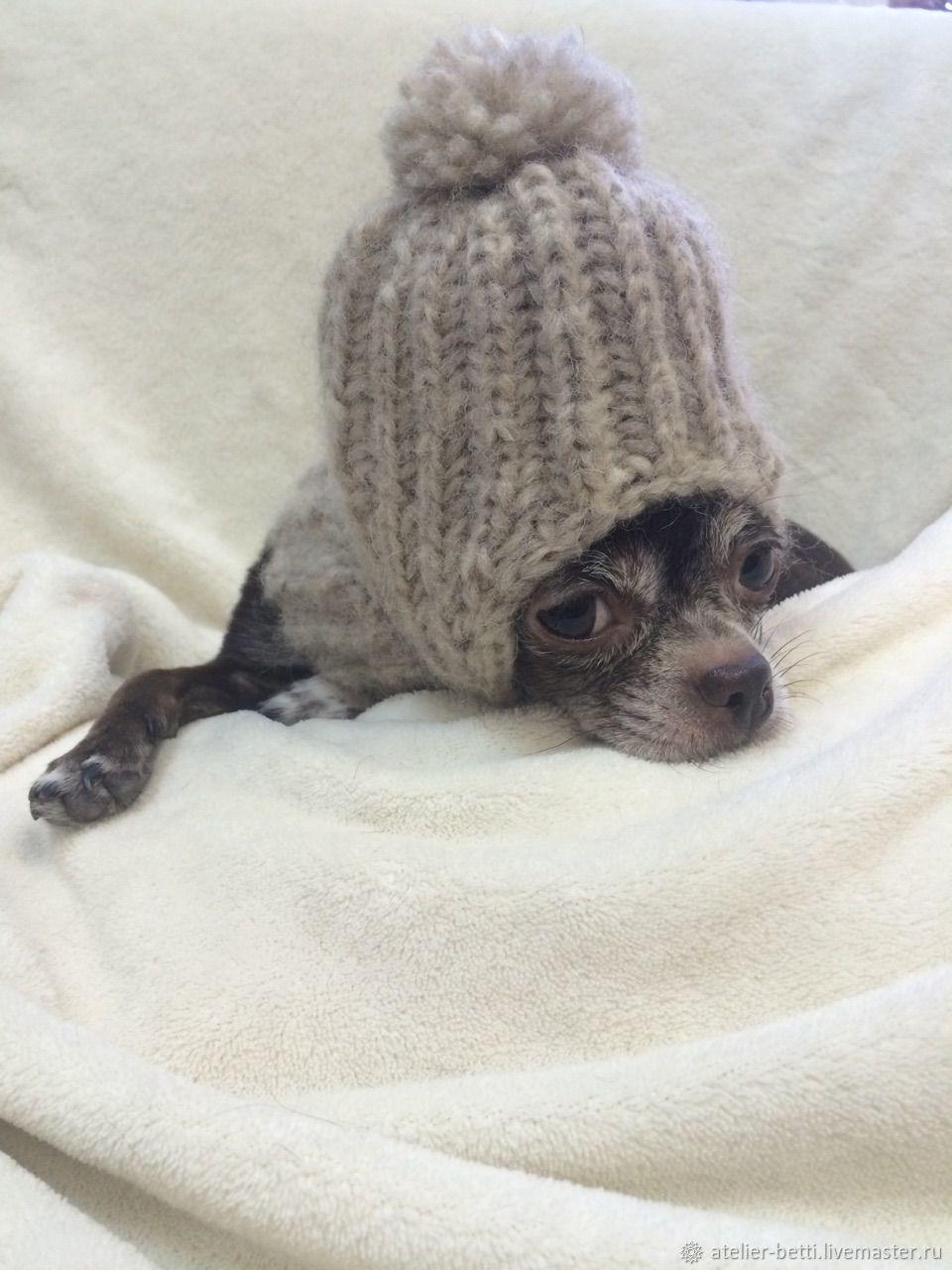 Одежда для питомцев: Капор серый, Одежда для собак, Санкт-Петербург, Фото №1