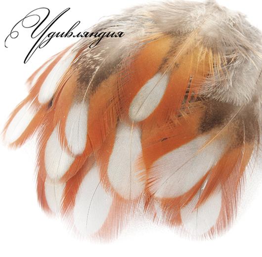 Другие виды рукоделия ручной работы. Ярмарка Мастеров - ручная работа. Купить Перо фазана натуральное, неокрашенное №64.. Handmade.