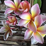 Цветы и флористика handmade. Livemaster - original item Plumeria seeds / Frangipani. Handmade.