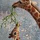 Игрушки животные, ручной работы. Жирафы. Natasha Yavid. Ярмарка Мастеров. Авторская работа, войлочная игрушка