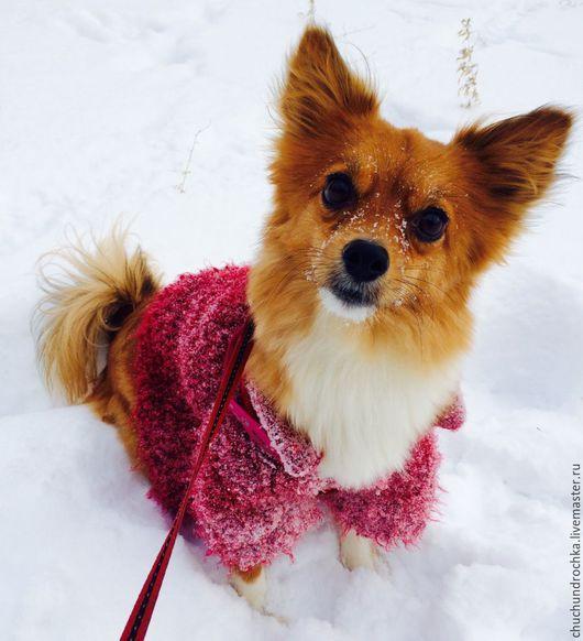 Одежда для собак, ручной работы. Ярмарка Мастеров - ручная работа. Купить Пальто для деловых встреч. Handmade. Бордовый, пальто, тепло