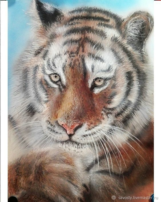 Tiger, Pictures, Vladivostok,  Фото №1