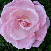 """Украшения ручной работы. Ярмарка Мастеров - ручная работа брошь-заколка из фоамирана  """"Розовая роза"""". Handmade."""