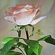 Цветы ручной работы. Заказать Роза из полимерной глины. ~~~Евгения~~~. Ярмарка Мастеров. Роза, цветы ручной работы, букет цветов