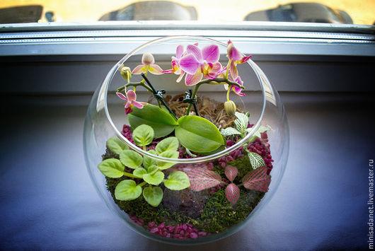 Первоначальный вид флорариума при покупке.