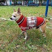 Для домашних животных, handmade. Livemaster - original item Sweater for dogs