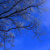 Фотокартины ручной работы. Ярмарка Мастеров - ручная работа Ультрамариновое небо, иней на ветвях Фотокартина. Handmade.