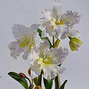Цветы и флористика ручной работы. Ярмарка Мастеров - ручная работа Орхидея из холодного фарфора.Каттлея белая. Handmade.