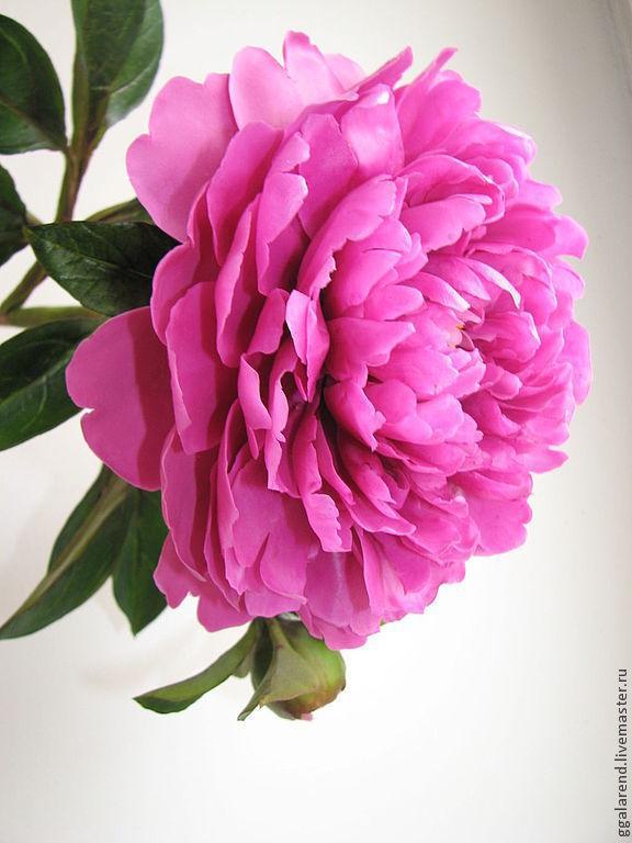 Пионы фуксия цветов
