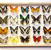 Для дома и интерьера ручной работы. Ярмарка Мастеров - ручная работа Коллекция из тропических бабочек. Handmade.