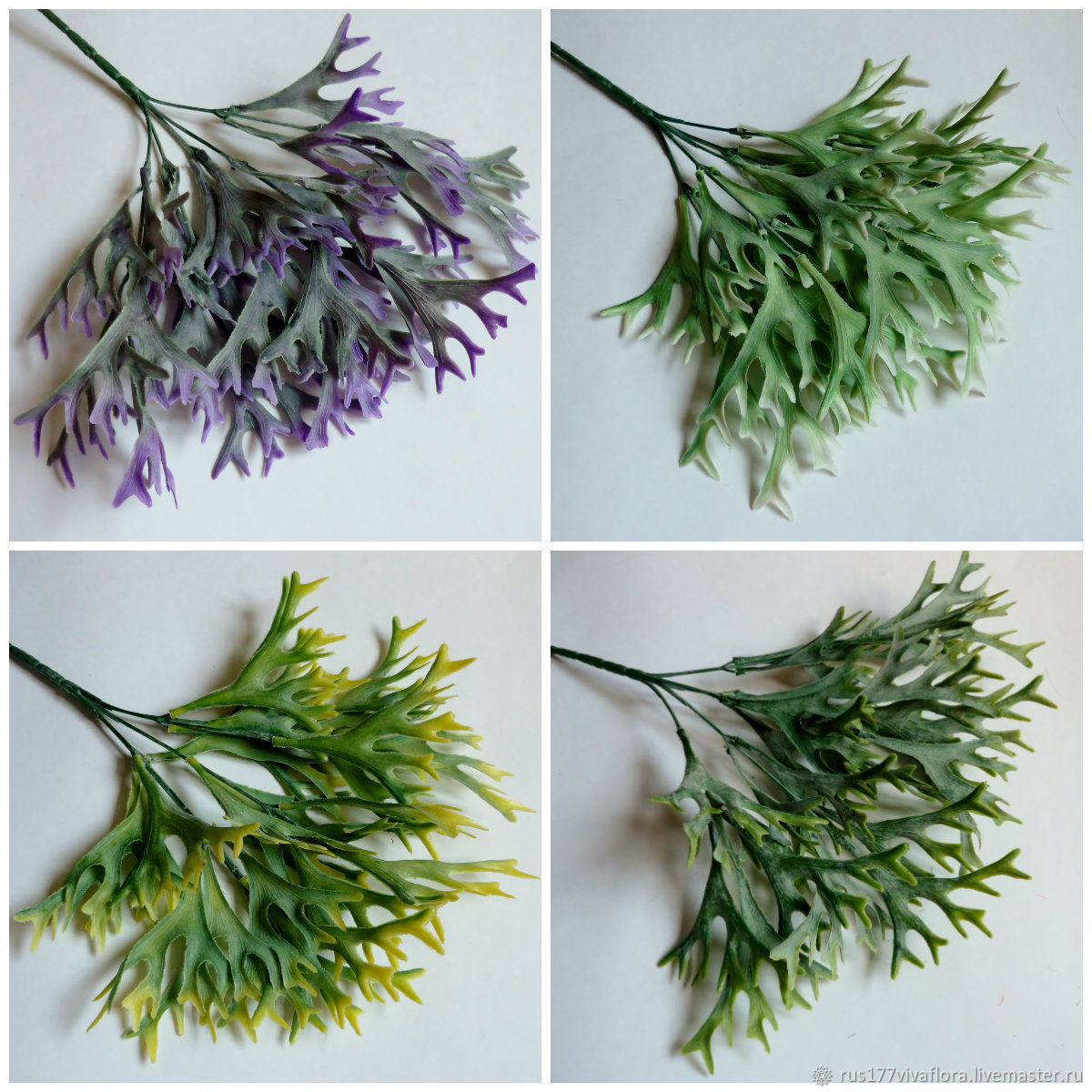каким причинам зелень название и фото для флористики показать новый