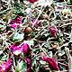 Ведьмин чай (ассортимент редких сборов). Ритуальная атрибутика. Ведьмины прогулки. Ярмарка Мастеров.  Фото №5
