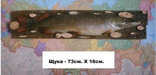 """Подарки для мужчин, ручной работы. Ярмарка Мастеров - ручная работа. Купить Макет Рыбы  """" ЩУКА"""". Handmade. Комбинированный"""