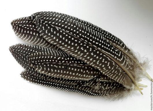 Другие виды рукоделия ручной работы. Ярмарка Мастеров - ручная работа. Купить Перья фазана 8 шт (в единственном экземпляре) БРОНЬ. Handmade.