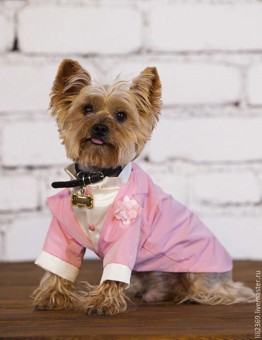 Одежда для собак, ручной работы. Ярмарка Мастеров - ручная работа. Купить Фрак шелковый. Handmade. Розовый, фрак, одежда для собак