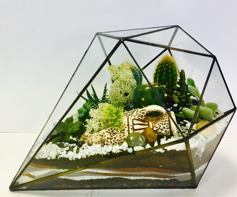 Цветы флорариума