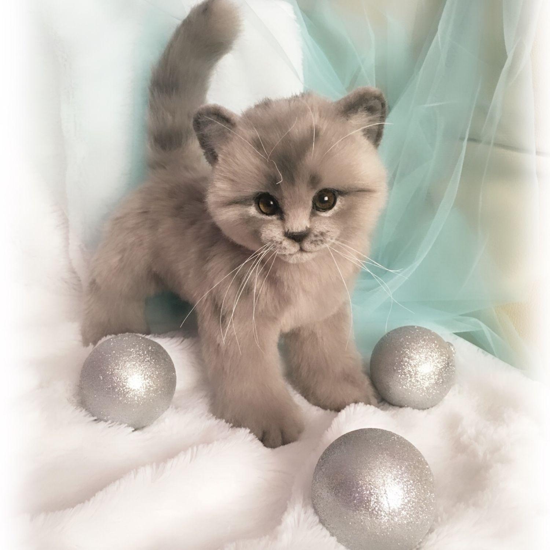 Котенок реалистичная игрушка из меха, Мягкие игрушки, Ижевск,  Фото №1