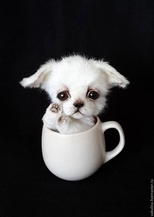 Мишки Тедди ручной работы. Ярмарка Мастеров - ручная работа. Купить щенок чихуахуа  Кексик. Handmade. Белый, чих, малыш