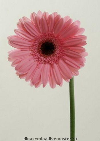 фото крупных цветов: