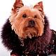 Одежда для собак, ручной работы. Одежда для собак зимний комбинезон Фейерверк. Лиля Одежда для собак. Интернет-магазин Ярмарка Мастеров.