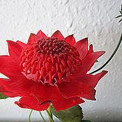 Цветы и флористика ручной работы. Ярмарка Мастеров - ручная работа Аленький цветочек-наяву, как в сказочном предании....(телопея). Handmade.