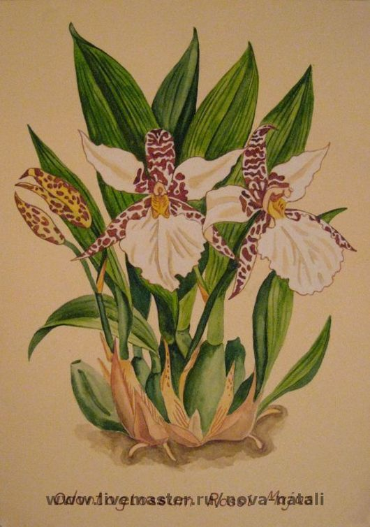 Картины цветов ручной работы. Ярмарка Мастеров - ручная работа. Купить Орхидеи. Handmade. Цветы, орхидеи, натюрморт, орхидея