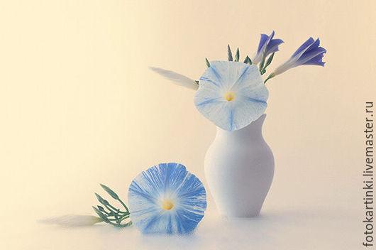 Фотокартины ручной работы. Ярмарка Мастеров - ручная работа. Купить чудная ипомея.. Handmade. Васильковый, голубой цвет, ипомея, цветы
