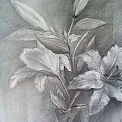 """Картины и панно handmade. Livemaster - original item Graphics . Pencil drawing """"Lily"""". Handmade."""