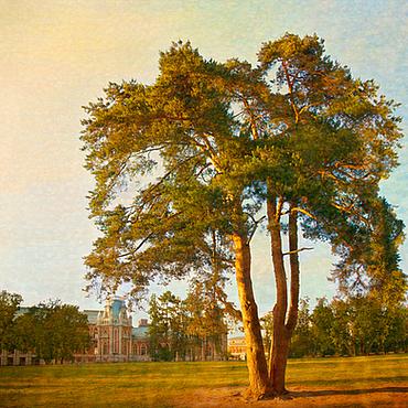 Картины и панно ручной работы. Ярмарка Мастеров - ручная работа Фотокартина природа, Осенний пейзаж с сосной в теплых солнечных цветах. Handmade.