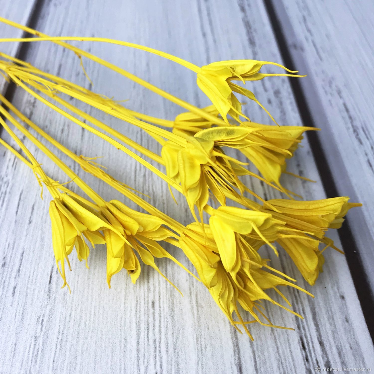 Nigella yellow, The dried flowers, Moscow,  Фото №1