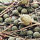Медитация ручной работы. Ярмарка Мастеров - ручная работа. Купить Травяные благовония Espiritus del bosque. Handmade. Магические ароматы