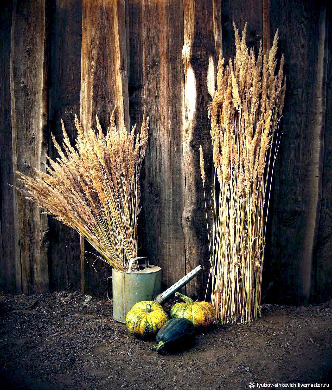 Высокий букет для напольной вазы (вейник наземный, полевой злак), Букеты, Кызыл,  Фото №1