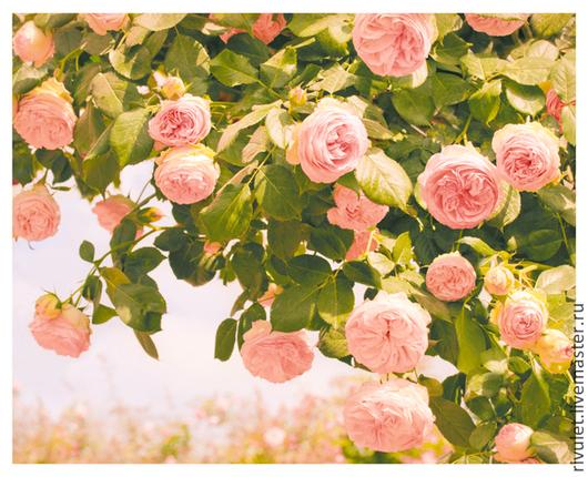 Розовые розы Купить фотокартину для интерьера , красивый подарок на свадьбу или день рождения. © Елена Ануфриева