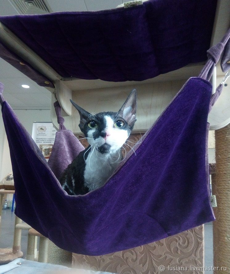 Hammock for cat on the wall buy. A hammock of fabric for the cat, Pet Hammock, Ekaterinburg,  Фото №1